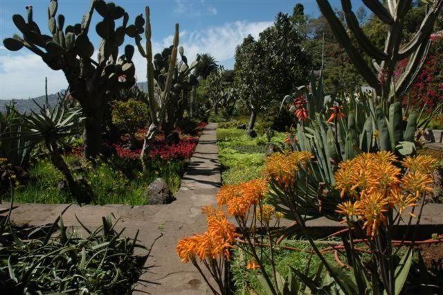 JardimBotanicoDaMadeira